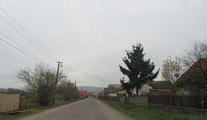 Borosneu (1)