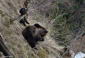 animale - foto Daniel Opait (2)