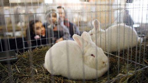 Expoziție de iepuri și păsări de rasă