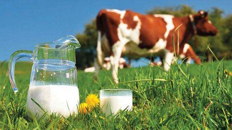 Fermierii din judeţ se plâng: Preţ de achiziţie prea mic la lapte