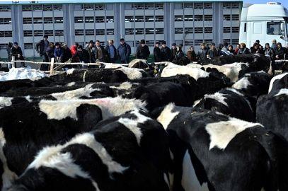 La Belin au sosit vacile cadou