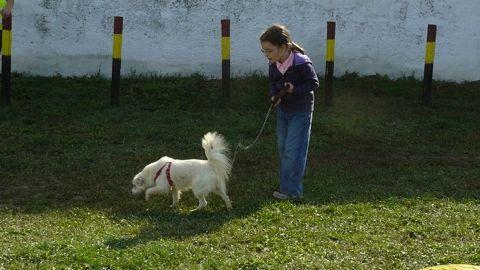 Peste 400 de câini comunitari, adoptaţi în decurs de trei ani
