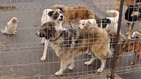 (Şi) La Baraolt se va construi un adăpost pentru câini