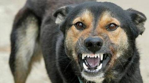 Un câine a băgat o bătrână în spital